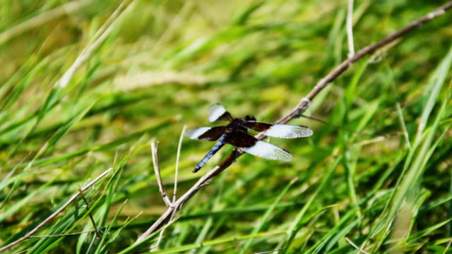 view of dragonfly insect badlands dakota national park - south dakota stock-videos und b-roll-filmmaterial