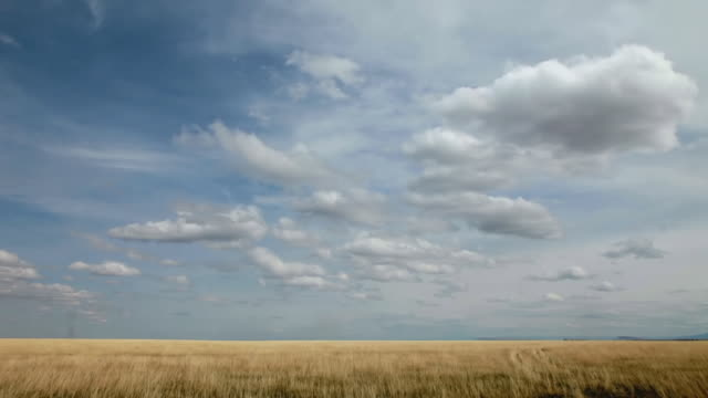 ws t/l view of dramatic clouds on golden prairie with sun and shadows rolling across landscape / augusta, montana, united states - prärie stock-videos und b-roll-filmmaterial