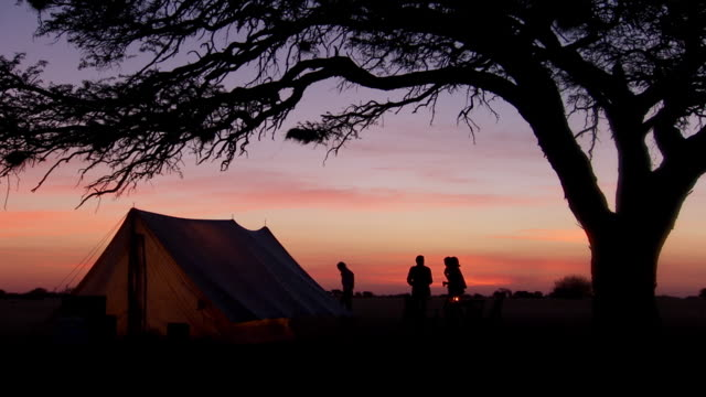 WS View of drinks at sunset at safari camp under tree / Lindberg, North west, South Africa
