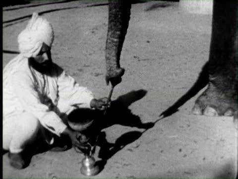 b/w view of elephant smoking  audio / india - 厚皮動物点の映像素材/bロール