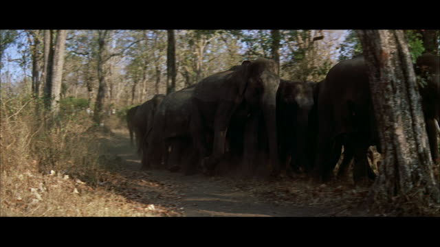 ms view of elephants walking fast into jungle - レターボックス点の映像素材/bロール