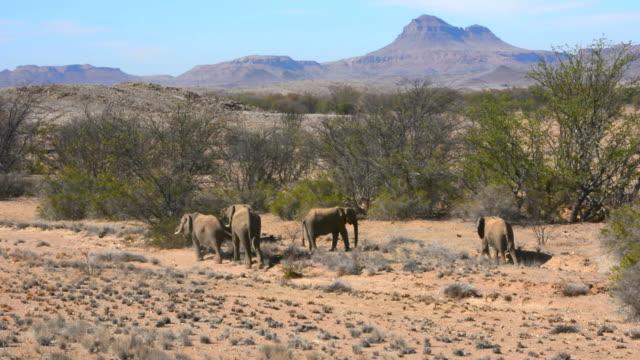 stockvideo's en b-roll-footage met ws view of elephants walking in dry desert / uibasen conservacy, namibia, south africa - kleine groep dieren