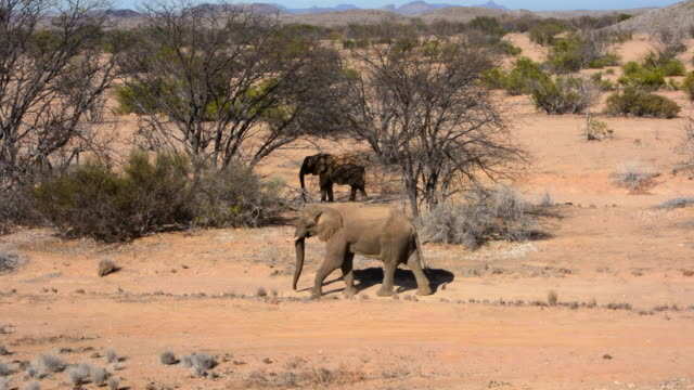 vidéos et rushes de ws view of elephants walking in dry desert / uibasen conservacy, namibia, south africa - petit groupe d'animaux