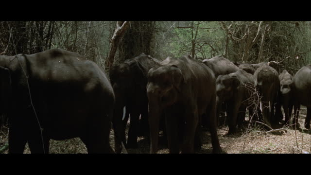 ms view of elephants walking into jungle - letterbox format stock videos & royalty-free footage