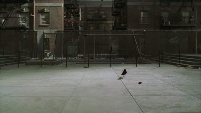 ws slo mo view of empty courtyard with blackbird on ground   - courtyard stock videos & royalty-free footage