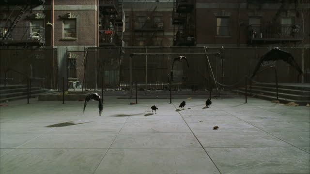 WS SLO MO View of empty courtyard with Blackbirds on ground