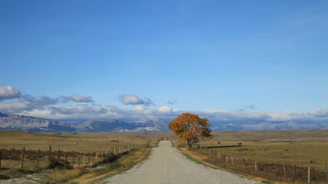 ws view of empty gravel road and lone golden tree on prairie with dramatic rocky mountains in background / choteau, montana, united states - 20秒或更長 個影片檔及 b 捲影像