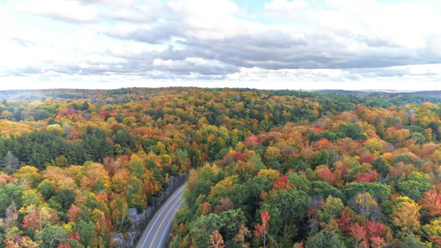 view of fall color in algonquin park and maple leaf road in whitney, ontario, canada at daytime - ontario kanada stock-videos und b-roll-filmmaterial