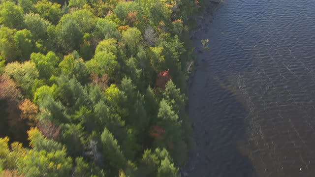 ws aerial pov view of fall forest with sebec lake and lakeshore area / piscataquis county, maine, united state - lakeshore stock videos and b-roll footage
