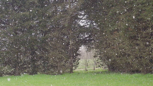 ws slo mo view of falling snow / calvados, normandy, france - calvados stock videos and b-roll footage