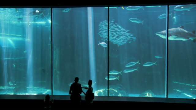 ws view of family looking in to shark tank at two oceans aquarium / cape town, western cape, south africa - 水族館点の映像素材/bロール