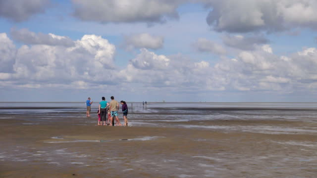 vídeos de stock, filmes e b-roll de ws view of family walking down in sea ebb tide at wadden sea, north sea north frisia / westerhever, schleswig holstein, germany - vazante