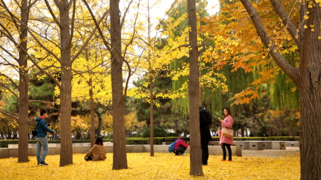 a view of famous tsinghua university on nov 08 2017 in beijing china tsinghua university is one of the best university in china - ginkgobaum stock-videos und b-roll-filmmaterial