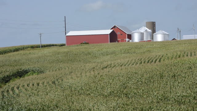 WS View of farm near Dyersville Iowa with red barn and waving corn rows / Dyersville, Iowa, United States