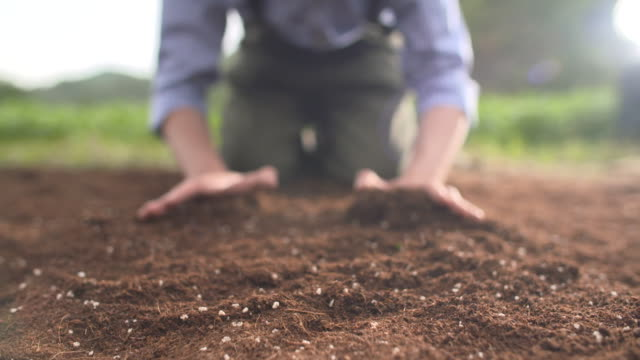 vidéos et rushes de view of farmer gathering the soil by using his two hands - agriculteur