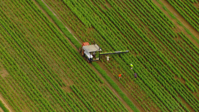 ws aerial zi zo view of farmer working in field / brisbane, queensland, australia - harvesting stock videos & royalty-free footage