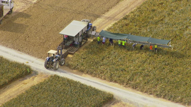ws aerial ts view of farmer working in pine apple farm and tractor loading pine apple in truck / melbourne, victoria, australia - pineapple stock videos & royalty-free footage