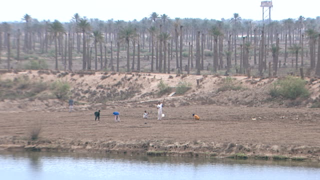 view of farmers sowing seeds in a field on the bank of shatt al-arab. the river is formed by the confluence of the euphrates and tigris and runs into... - basra stock-videos und b-roll-filmmaterial