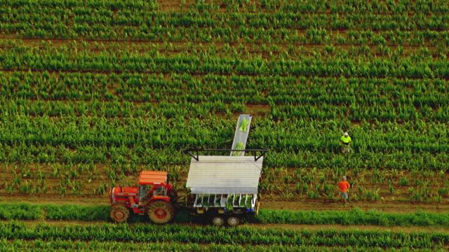 vídeos de stock e filmes b-roll de ws aerial zi view of farmers working in field hindu temple / brisbane, queensland, australia - trator