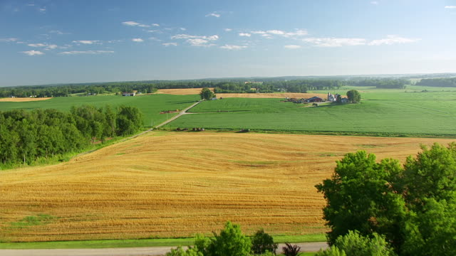 WS AERIAL POV View of farmland with yellow crops and green trees / Warrick County, Lincoln City, Indiana, United States