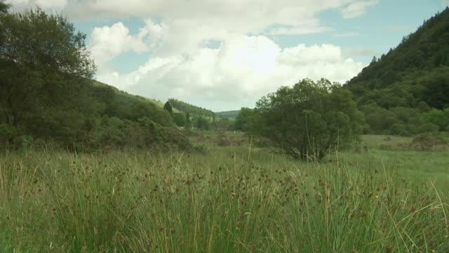 WS TU View of field in Ireland / Rathdum, Ireland