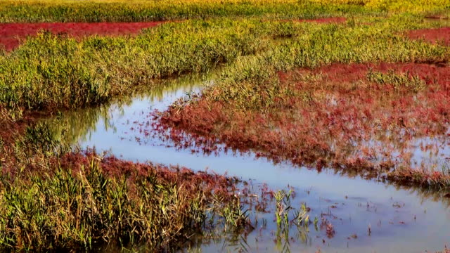 view of field of reeds and mud flat at suncheonman bay(natural landmark,ecological park) - natural landmark stock videos & royalty-free footage