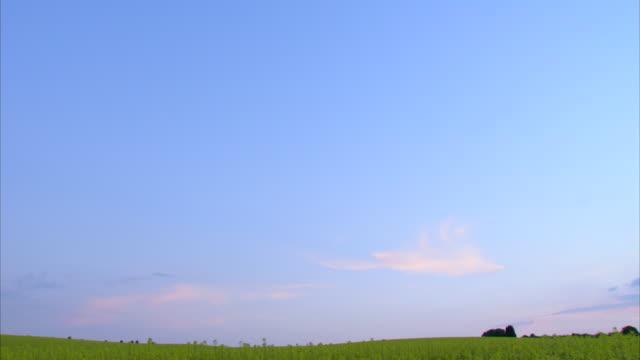 vídeos de stock, filmes e b-roll de ws td view of field / oxford, oxfordshire, united kingdom - oxfordshire