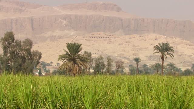 ws zi view of field with hatshepsut temple in background / egypt - tempio di hatshepsut video stock e b–roll