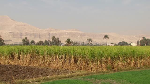 WS ZI View of field with Hatshepsut Temple in background / Egypt