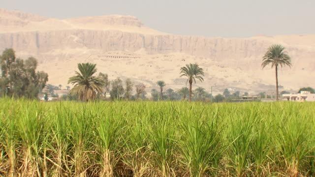 vídeos de stock, filmes e b-roll de ws zo view of field with hatshepsut temple in background / egypt - templo de hatshepsut