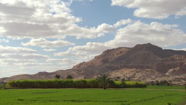 ws tl view of field with hatshepsut temple in background / egypt - tempio di hatshepsut video stock e b–roll