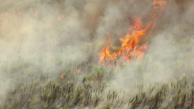 MS AERIAL View of fire and burning sugarcane in field / Lake Okeechobee, Florida, United States