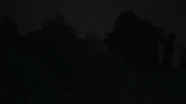 vídeos de stock e filmes b-roll de view of fireflies at selangor river at night - pirilampo escaravelho