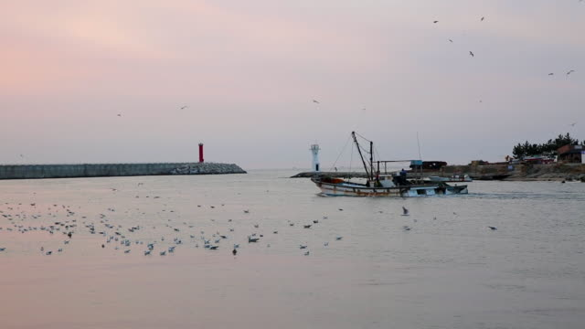 view of  fishing boat in ganggu harbor - north gyeongsang province stock videos & royalty-free footage