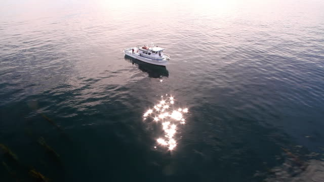 WS AERIAL TS View of Fishing boat on ocean with seaweed and beautiful reflection / Newport Beach, California, United States