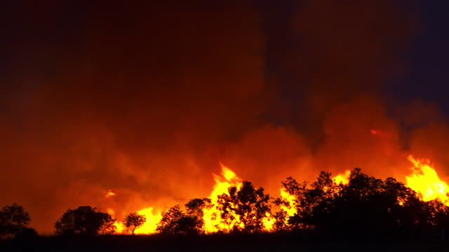 vídeos y material grabado en eventos de stock de ws view of flames and smoke with tree line sillouetted / queensland, australia - australia