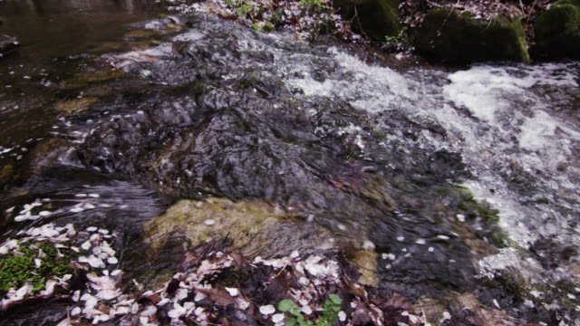 view of floating petal of cherry blossom in stream of umunsan mountain - 小川点の映像素材/bロール