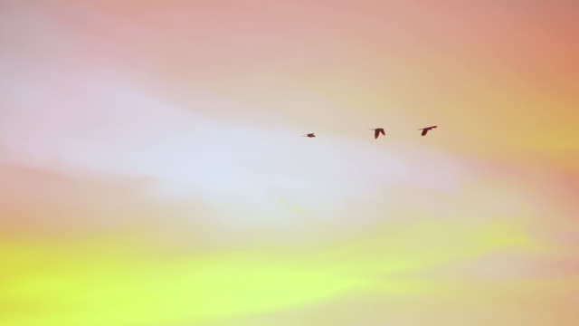 ws ts view of flock of macaws flying at canudos reserve / canudos reserve, bahia, brazil  - stormo di uccelli video stock e b–roll