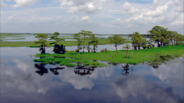 ws pov aerial view of flooded everglades wetlands under cloudy blue sky / tampa, florida, usa - sumpf stock-videos und b-roll-filmmaterial