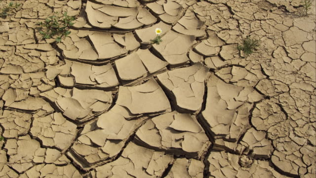 cu zi view of flower growing in cracked dry earth / malaga, andalusia, spain - single flower stock videos and b-roll footage