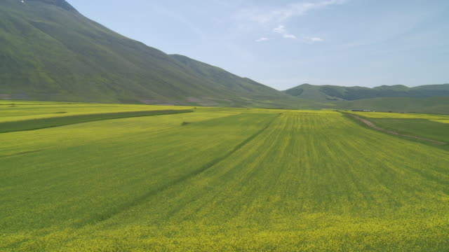 vídeos de stock, filmes e b-roll de ws view of flowering lentils and oilseed field / castelluccio di norcia, umbria, italie - umbria