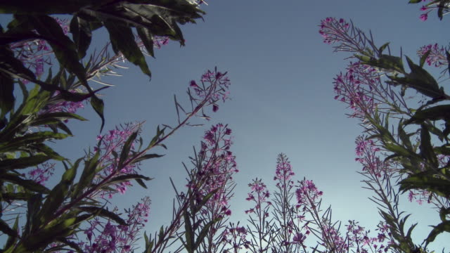 MS PAN View of flowers against sky / Denmark
