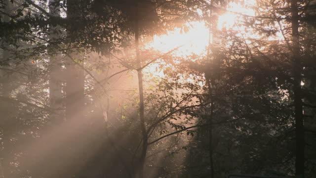 ms view of fog in forest at dawn / freudenburg, rhineland-palatinate, germany - 木漏れ日点の映像素材/bロール