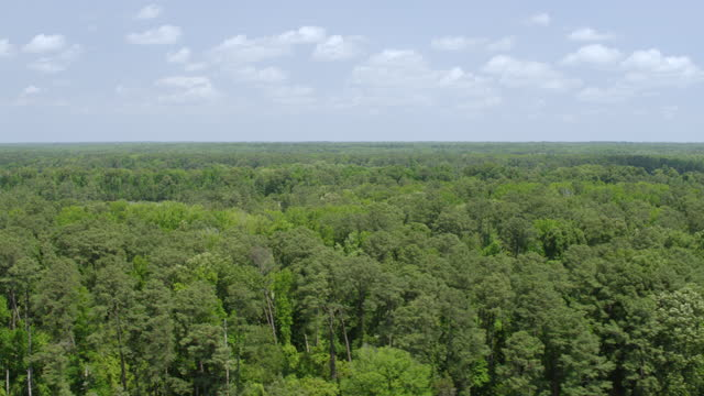 vídeos de stock e filmes b-roll de ws aerial pov view of forest area with james river / jamestown, virginia, united states - jamestown virginia