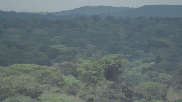 ws pan view of forest / buikwe, uganda - ウガンダ点の映像素材/bロール