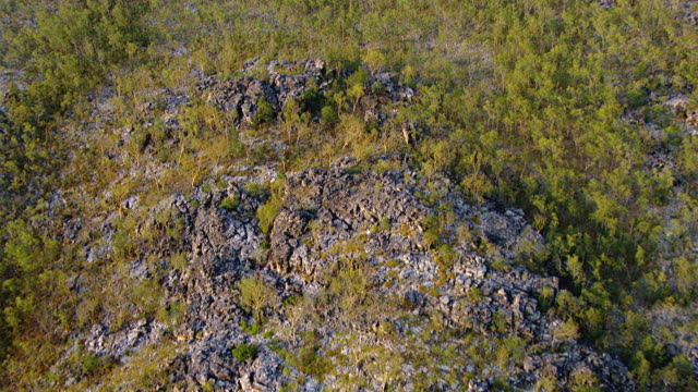 WS AERIAL View of forest / Darwin, Northern Territory, Australia