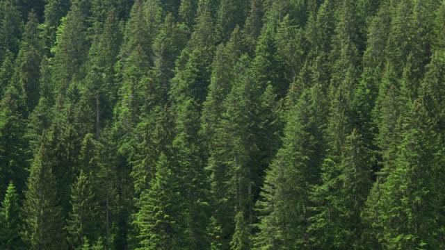 森の上からの眺め - シュバルツバルト点の映像素材/bロール