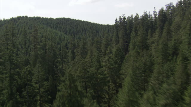 ws aerial view of forest in mountain / oregon, united states - オレゴン州点の映像素材/bロール