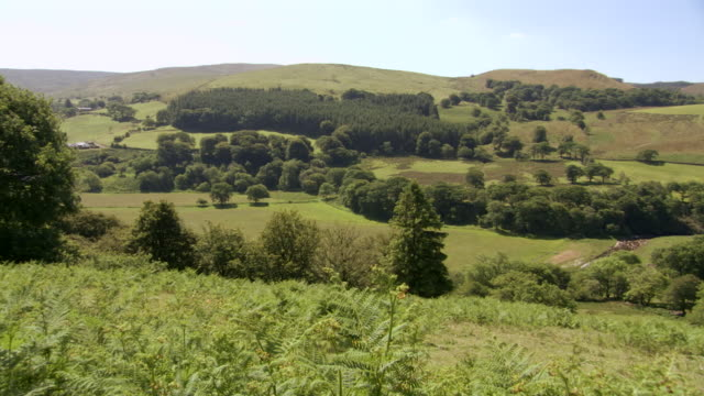 ws pan view of forest / powys, wales  - powys stock videos and b-roll footage