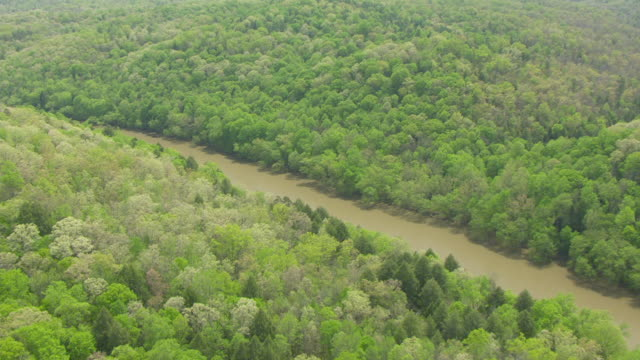 ws aerial view of forest to cumberland river in daniel boones national forest / kentucky, united states - 国有林点の映像素材/bロール